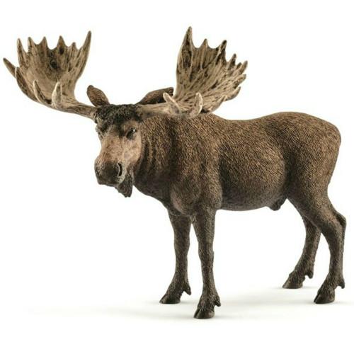 Moose Bull 2017