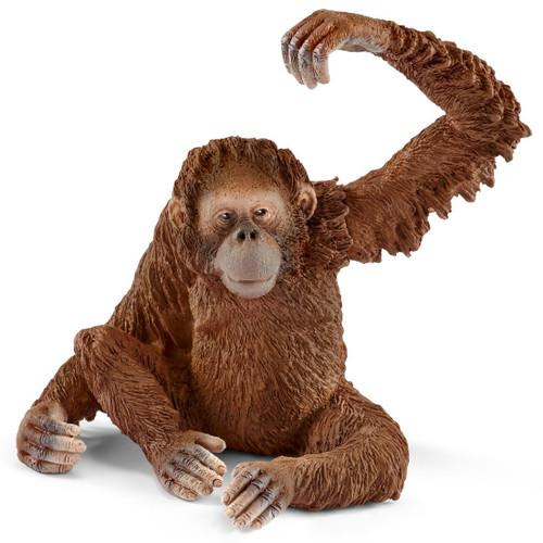 Orangutan Female