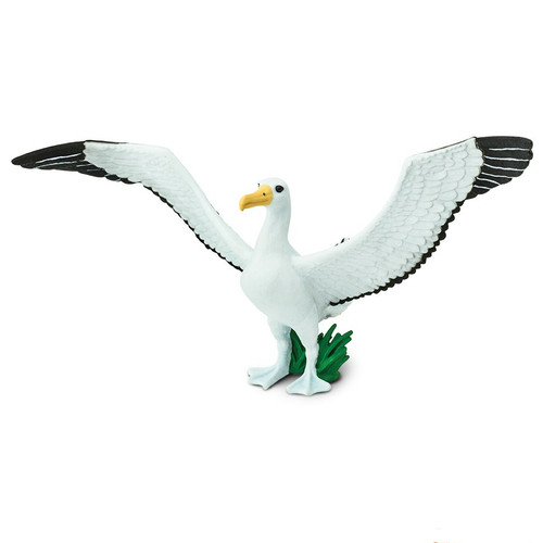 Giant Albatross Safari