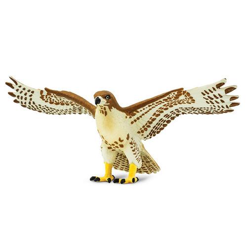 Red Tailed Hawk Safari