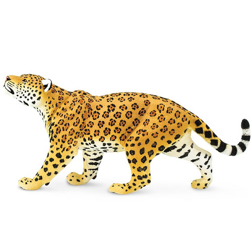 Jaguar Jumbo