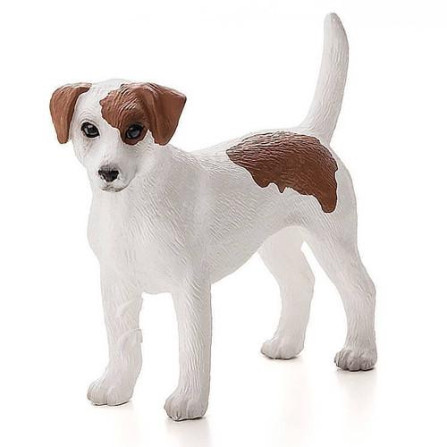 Jack Russell Terrier Mojo