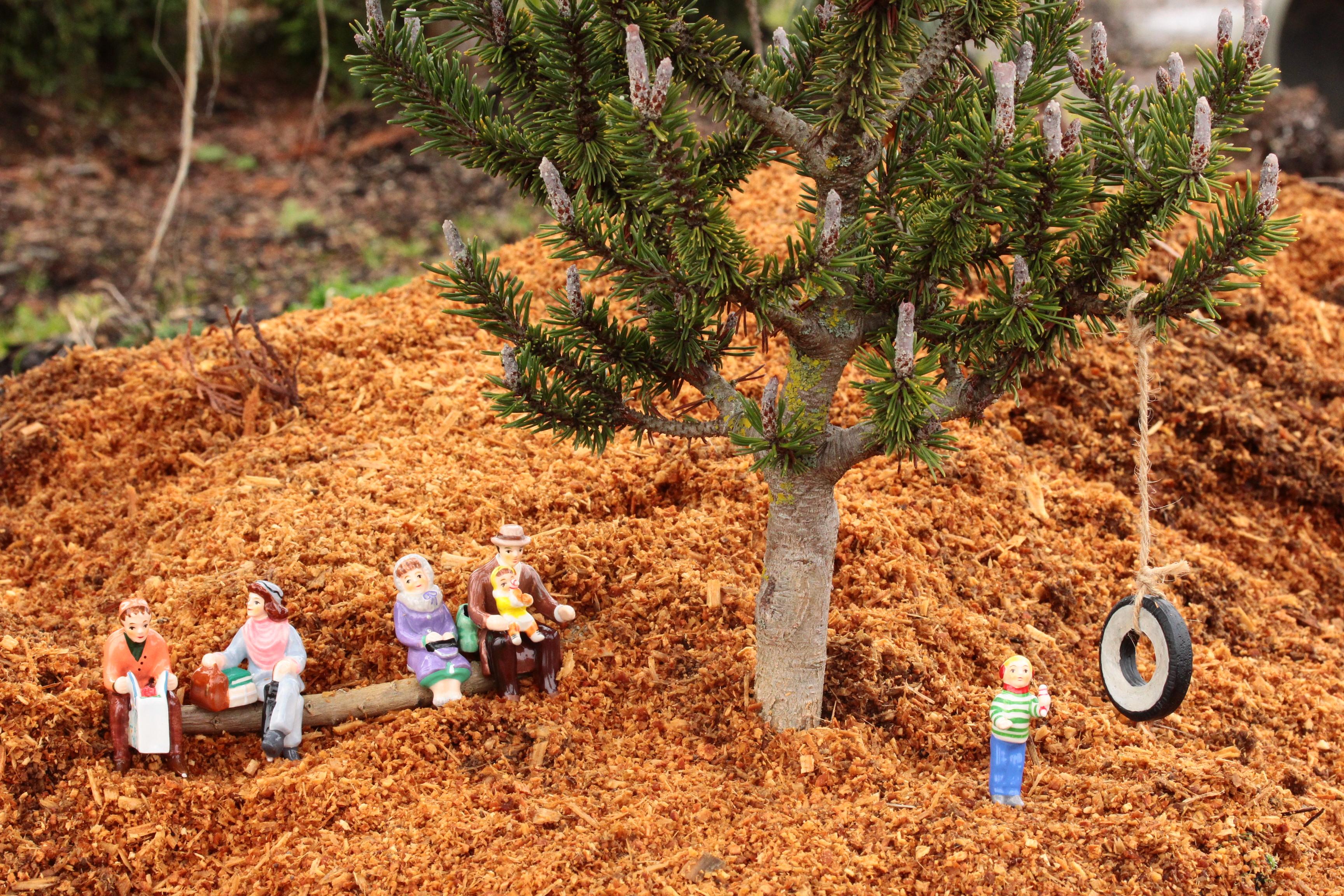 Fairy Gardens! - Conifer Kingdom