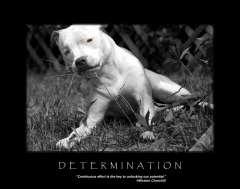 free-dog-art-thumb03.jpg