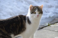 Cats and Antifreeze Poisoning