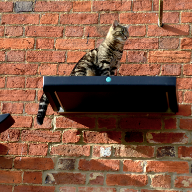 Catipilla High Plate and Hammock Cat Shelves, designed to mount to walls indoor or outdoor.