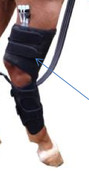 Cold Compression Therapy For Horses