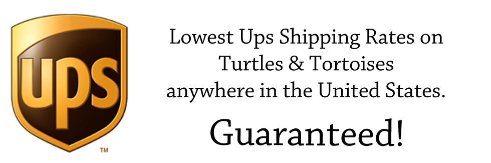 Banner Lowest Ups Shipping Rates