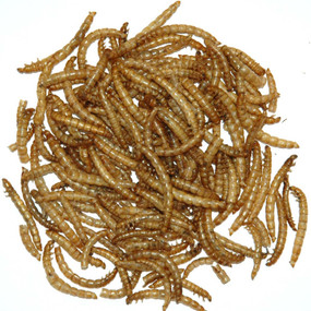 Freeze Dried Meal Worms