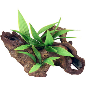 Exotic Environments Mopani Wood With Plants