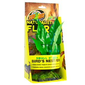 Zoo Med Birds Nest Fern