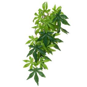 Exo Terra Abutilon Silk Plant