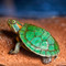 baby red ear slider turtle for sale