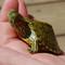Hatchling Rio Grande Slider Turtle