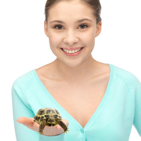 Juvenile Russian Tortoises For Sale