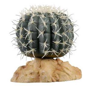 Zilla Pincushion Cactus
