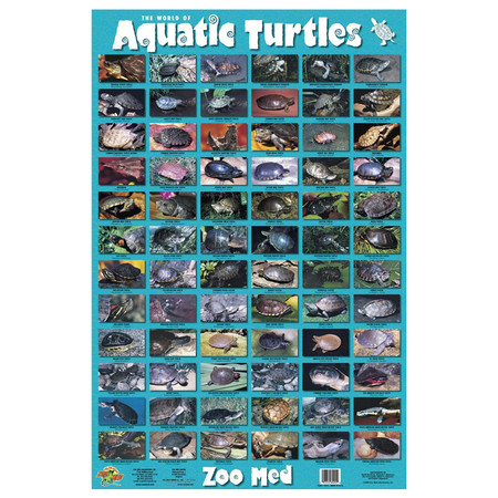 Zoo Med Aquatic Turtles Poster.