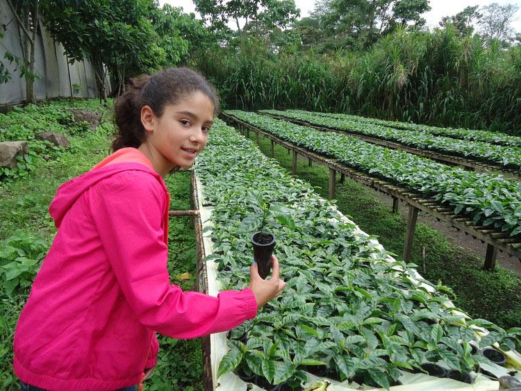 Baby Arabica seedlings at El Recreo farm in Nicaragua