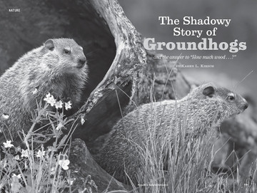 Groundhogs, Woodchucks - Old Farmer's Almanac