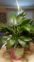 The Bloom Closet's Small Green Plant is on Sale!