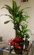The Bloom Closet's Large green plant, comes in nice container and is always gorgeous