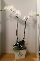 The Bloom Closet's Orchids in Bloom The Bloom Closet in Augusta Ga