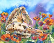 Horses - Limited Edition - Poppy Princess