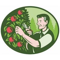 Summer Pruning Workshop