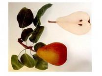 Beurre Hardy Pear (medium)