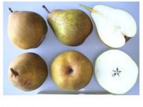 Doyenne Du Comice Pear (medium)