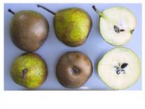 Winter Nelis Pear (Bonne De Malines) (medium)