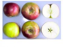 Idared Apple (dwarf)