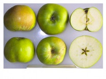 Bramley's Seedling Apple (medium)