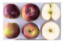 Spartan Apple (medium)