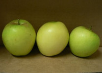 Sugar-Loaf Pippin Apple (medium)