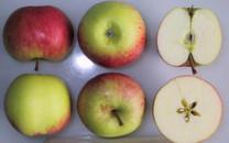 James Grieve Apple (stepover)