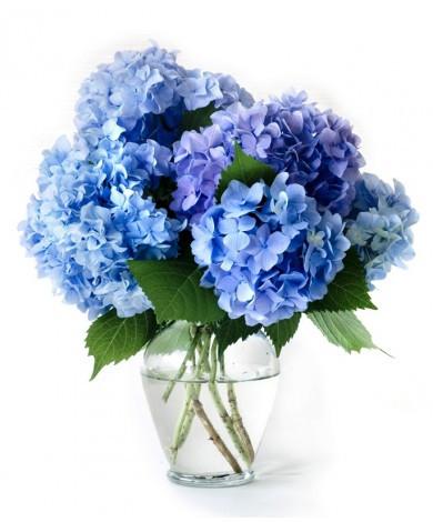 Light Blue Hydrangea Vase