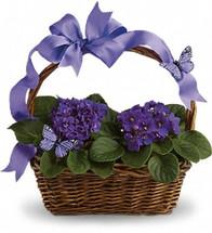 Sweet Violet Gift