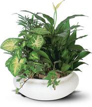 Medium Plant Garden