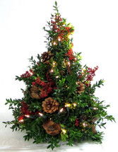 Boxwood tree with natural outdoor decorations.