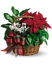 Holiday Poinsettia & Plant Garden Basket