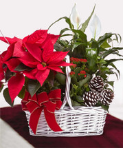 Tropical plants & Red Poinsettia
