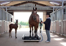 Horse Weigh Scale Kelso