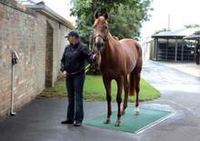 Horse Weigh Scale Kentucky