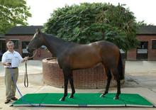 Horse Weigh Scale Cheltenham
