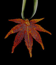 Japanese Maple Leaf Ornament