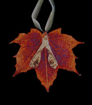 Sugar Maple Leaf with Gold Seeds