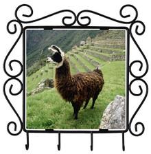 Llama Metal Key Holder