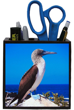 Blue Footed Booby Wooden Pencil Holder
