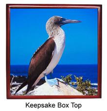 Blue Footed Booby Keepsake Box